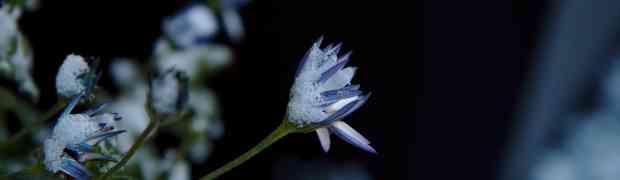 Daan, sneeuwpret en bevroren bloemen